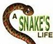 A Snakes Life last ned